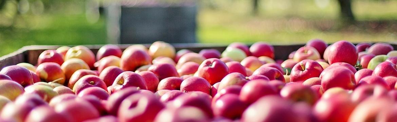 Azienda agricola laimburg agricoltura amministrazione for Azienda di soggiorno bolzano